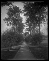 Northern view down Willow Path